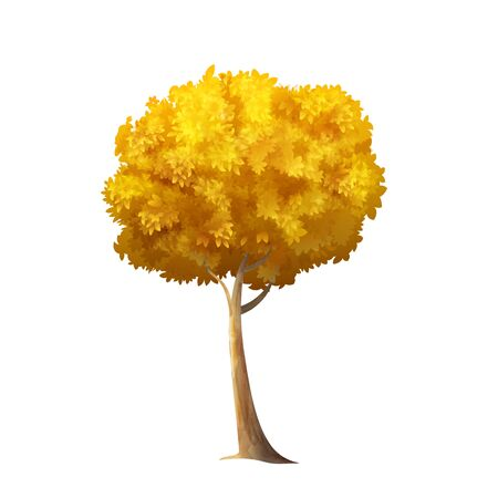 sycamore: Color Vector Photo Realistic Illustration Of Big Gold Autumn Tree Isolated On White Illustration
