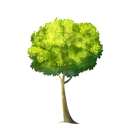 individual color: Color Vector Photo Realistic Illustration Of Big Green Tree Isolated On White Illustration