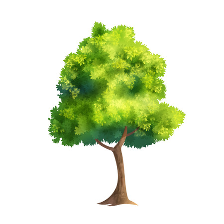 Color Vector Illustration Of Big Tree With Fresh Leaves Isolated On White Ilustracja