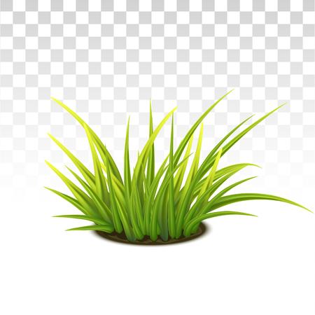 Vector Photo Realistic Tussock Of Green Fresh Grass Illustration