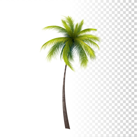 Vector Photo Realistic Green Classic Palm Tree Illustration.