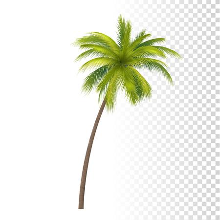 Realistic Green Classic Palm Tree Illustration.