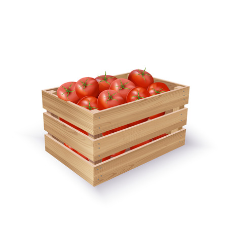 Vector Photo Realistic illustration Of Tomatoes In Wooden Crate