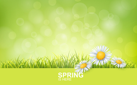 Spring Bright Background With Green 3d Photo Realistic Grass And Flowers. Spring Is Here Vector Illustration