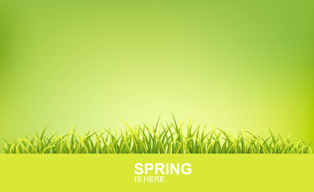 Spring Bright Background With Green 3d Photo Realistic Grass. Spring Is Here Vector Illustration
