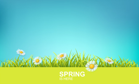 Spring Bright Background With Green 3d Photo Realistic Grass, Flowers And Clear Blue Sky. Spring Is Here Vector Illustration