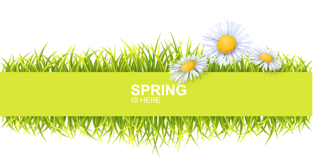Spring Bright Border With Green 3d Photo Realistic Grass And Flowers. Spring Is Here Vector Illustration