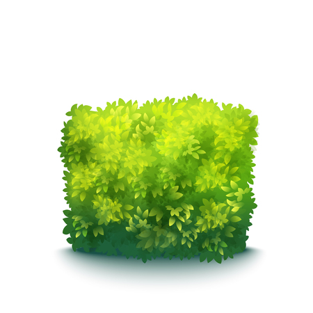 Vector Realistic Fresh Green Garden Hedge Isolated On White Çizim