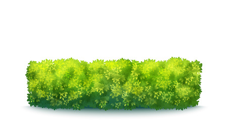 Vector Realistic Fresh Green Garden Hedge Isolated On White Imagens - 124973583