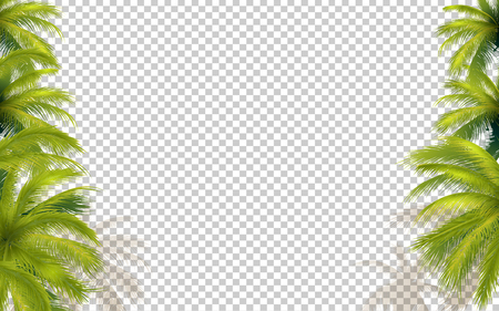 Bright Green Palms Isolated On Transparent Background. Vector Photo Realistic Illustration. Top View Çizim
