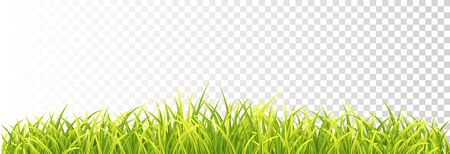 Gren Fresh Grass Border Isolated On Transparent Background. Vector Photo Realistic Blades illustration. Front View 矢量图像