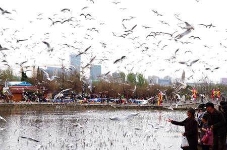 observe: observe seagull lakeside