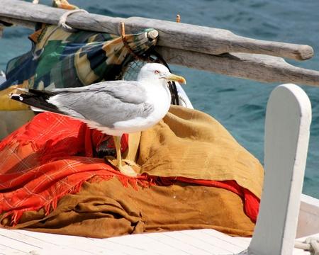 shallop: seagull on sloop in Croatia Stock Photo