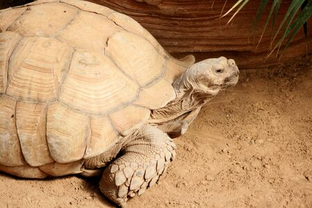 land turtle: land turtle