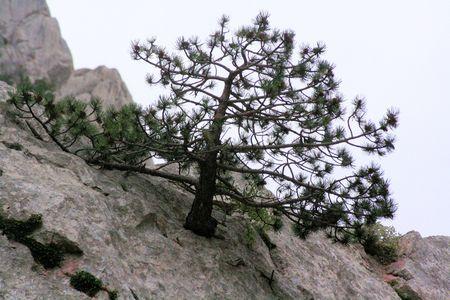 paklenica: lonely tree in national park paklenica, Croatia Stock Photo