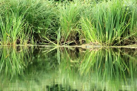 reflexion: reflexion in the water of the Semois River