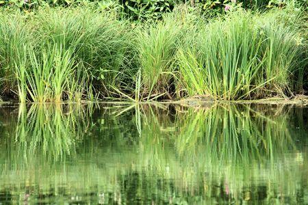 reflexion: reflejo en el agua del r�o Semois