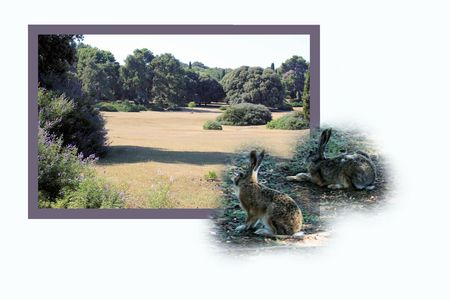 isles: Design for postcard, national park Brioni, Croatia