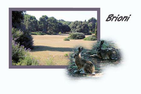combi: Design for postcard, national park Brioni, Croatia, with text