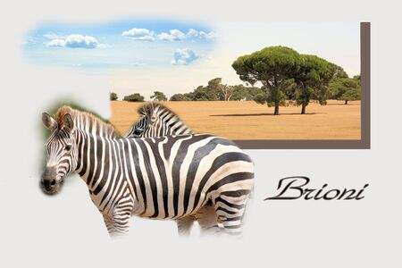 Design for postcard, national park Brioni, Croatia, with text photo