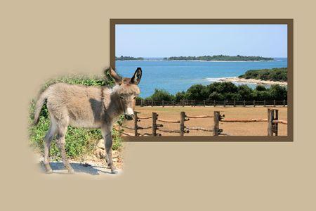 combi: Design for postcard, national park Brioni, Croatia