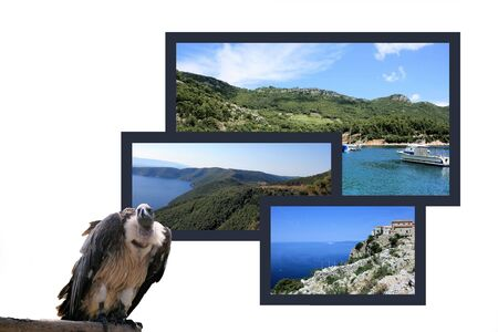 combi: Design for postcard, island Cres, Croatia