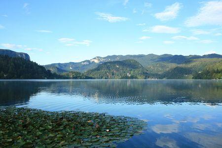 karawanks: water lilly on lake Bled, Slovenia