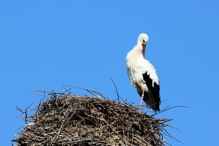 emigrant: stork on nest Stock Photo