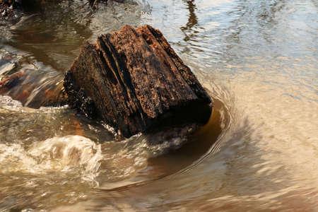 river trunk: trunk in river