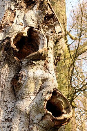 toter baum: toter Baum