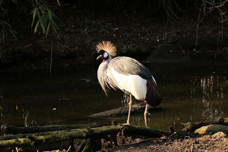 emigrant: crane Stock Photo