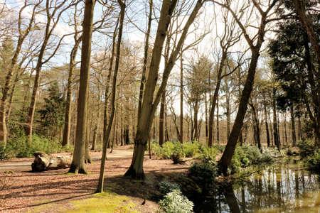 streamlet: view in mikhof park, Brasschaat, Belgium