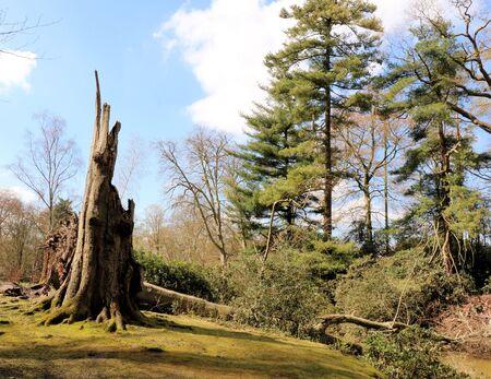 toter baum: toter Baum, mikhof Park, Brasschaat, Belgien