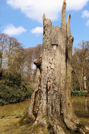 streamlet: dead tree, mikhof park, Brasschaat, Belgium Stock Photo