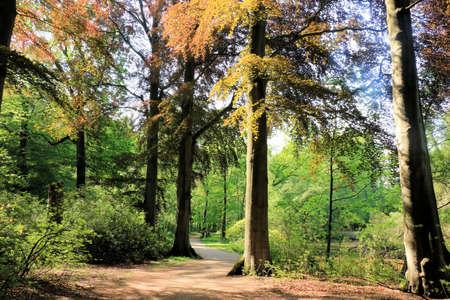 streamlet: park, Brasschaat, Belgium
