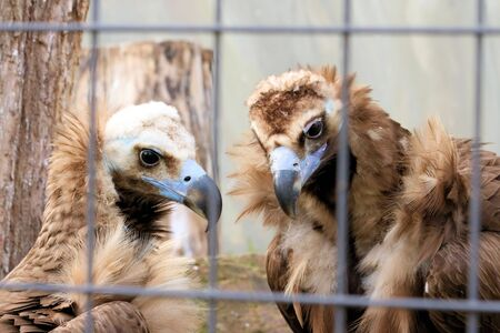 emigrant: Vultures