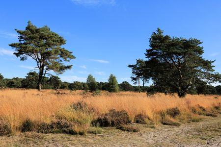 view in Kalmthout heather, Belgium Stock Photo