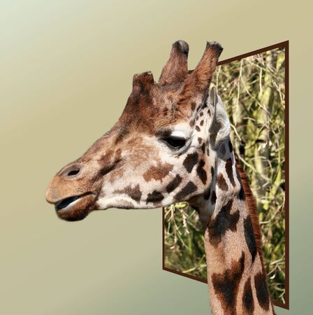 bounds: giraffe out of bounds in effect
