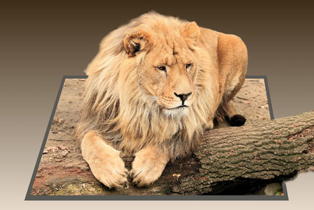 3d lion: Lion in out of bounds effect Stock Photo