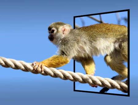 bounds: Squirrel monkey in out of bounds effect