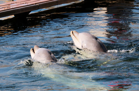 dolphinarium: dolphins in the dolphinarium Stock Photo