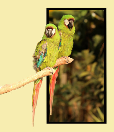 bounds: Parrots in out of bounds effect