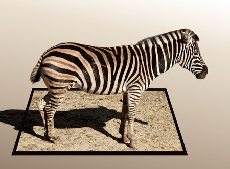 bounds: Zebra in out of bounds effect