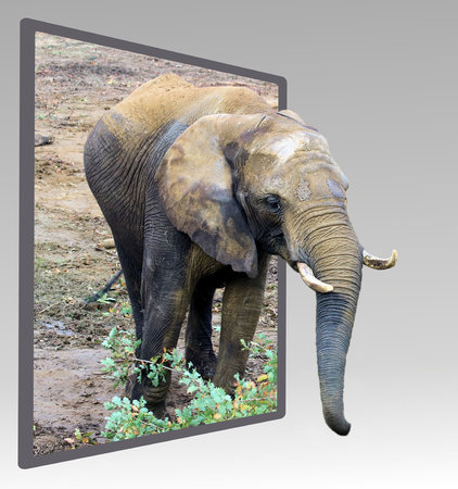 bounds: Elephant in out of bounds effect Stock Photo