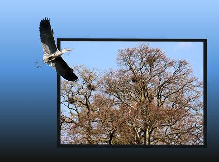 heron flying Foto de archivo
