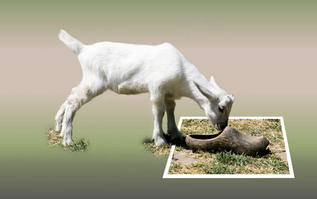 bounds: Goat in out of bounds effect