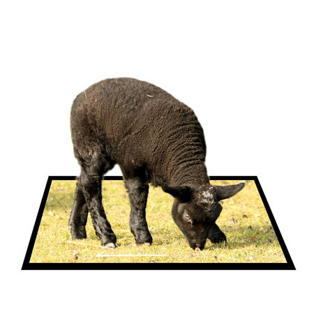 bounds: Black sheep in out of bounds effect