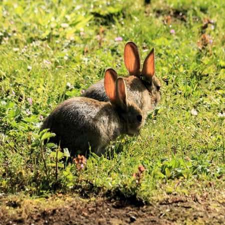 swampland: Couple rabbits Stock Photo