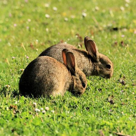 rabbits background. Stock Photo
