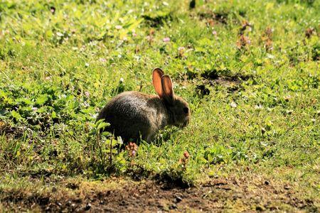 rabbit playing around Stock Photo